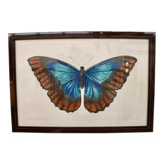 Framed Naturalist Moth Print, Blue & Red For Sale