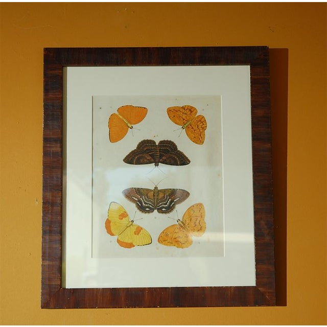 Early 18th Century Antique Butterfly Prints - Set of 8 For Sale In Los Angeles - Image 6 of 11