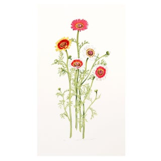 Marion Sheehan - African Daisy Lithograph For Sale