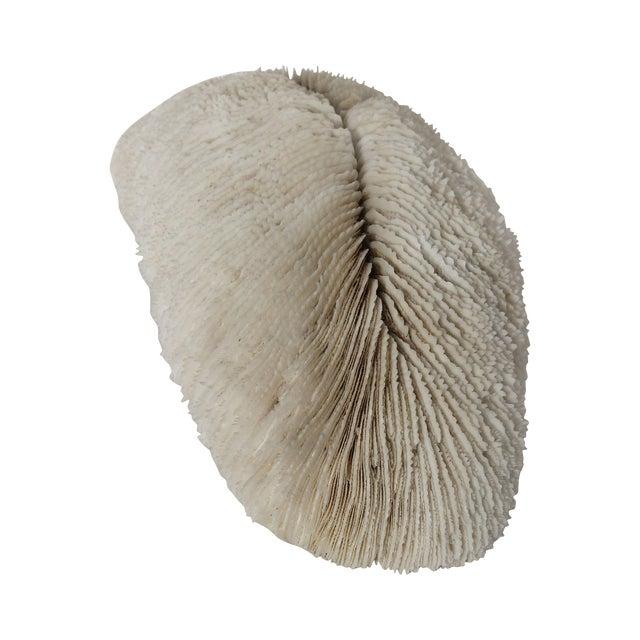 Rare Antique Coral - Image 1 of 4