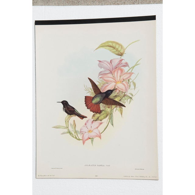 1940s John Gould Hummingbird Lithographs - Set of 6 (Marked Down to $35 Until September 15th) - Image 5 of 11