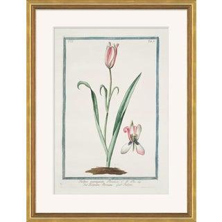 Hortus Romanus 1772-1793 XXXVIII Framed Art Print For Sale
