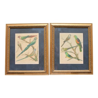 Mid-Century Framed Bird Prints - a Pair