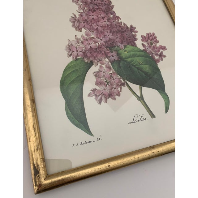 Traditional Reproduction Antique Botanical Print Lilac Framed For Sale - Image 3 of 12