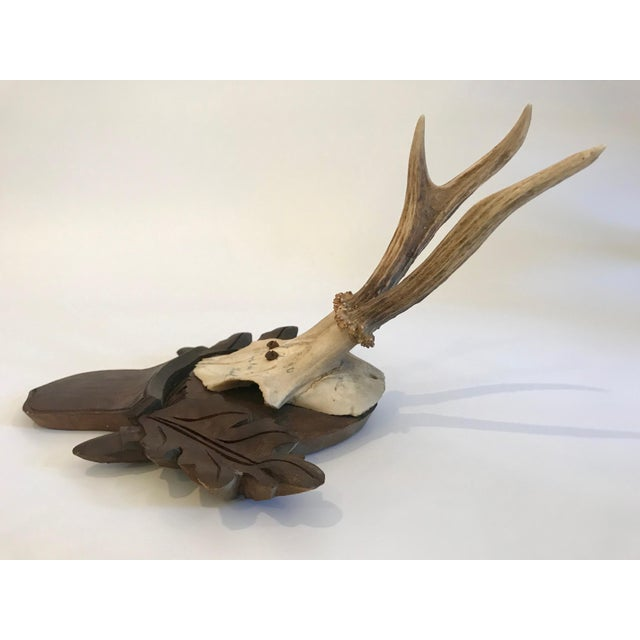 Vintage Black Forest antlers mounted on a round back with a shield carved underneath with leaf decoration on each side.
