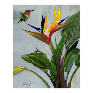 Premium Giclee Print Of Hummingbird Of Paradise For Sale
