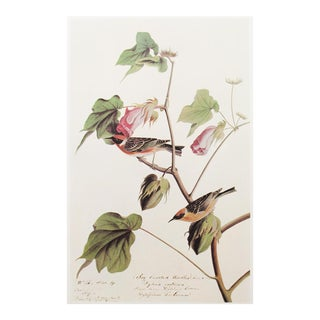 1960s Cottage Style Lithograph of Bay Breasted Warbler by John James Audubon