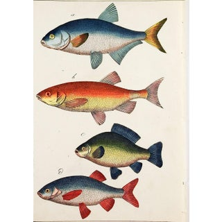 Colorful Fish Woodcut Prints - a Pair Preview