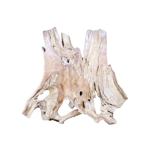 Organic Modern Natural Teak Root Sculpture For Sale