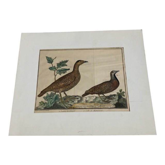 18th Century French Matted Bird Engraving by Martinet Featuring a Senegal Partridge and a Madagascar Quail For Sale