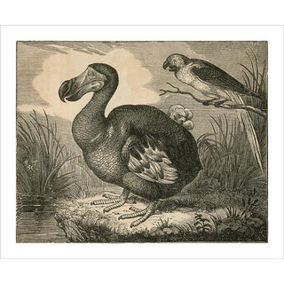 Vintage Mr. Dodo Archival Print