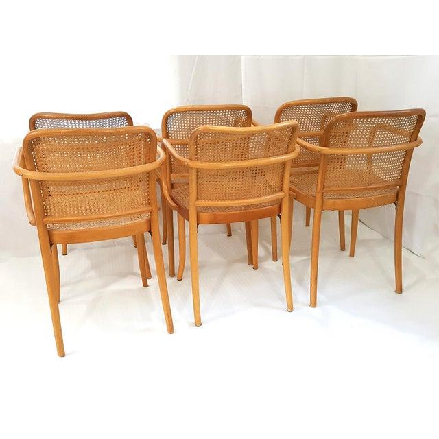 Stendig Vintage Stendig Cane Bentwood Dining Chairs- Set of 6 For Sale - Image 4 of 12