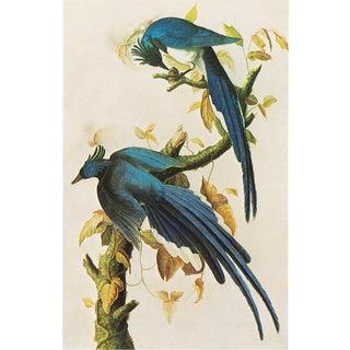 1966 Columbia Jay by John James Audubon, Stunning Chinoiserie Style Vintage Print For Sale