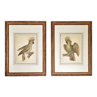 Large Pair of Restored Vintage Crested Parrots or Cockatoos Prints With Original Carved Wood Frame/Glass For Sale