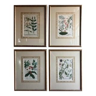 Set of 4 Mezzo Tint Copper Plate Botanical Engravings by Johann Wilhelm Weinmann For Sale