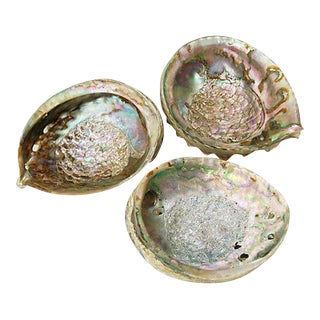 Mother-Of-Pearl Abalone Shells - 3 Pieces