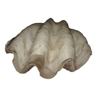 Tridacna Gigas Large Clam Shell