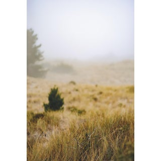"""Hardie Cobbs """"Morning Fog Lifting"""" Contemporary Photograph For Sale"""