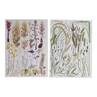 Vintage Botanical Wheat Prints - A Pair