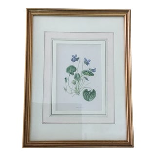1960s Traditional Framed Painting of Violet