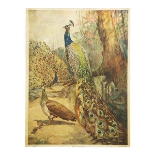 Swedish vintage peacocks school poster