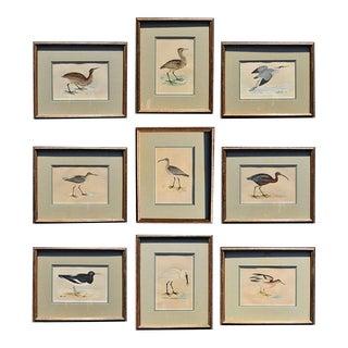 1900's Framed Art Water Bird Set of Prints - Set of 9 For Sale