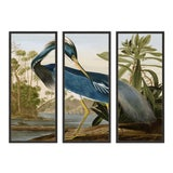 Image of Audubon Louisiana Heron Triptych in Black Frame - Set of 3 For Sale