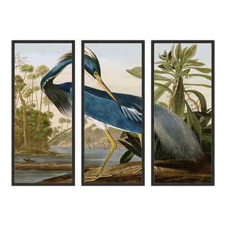 Audubon Louisiana Heron Triptych in Black Frame - Set of 3 For Sale