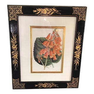 Botanical Lithograph by James Andrews For Sale