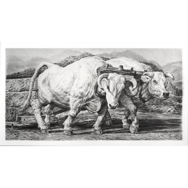 """Mid-Century Modern Contemporary """"Oxen"""" Rick Shaefer Charcoal Print For Sale - Image 3 of 3"""