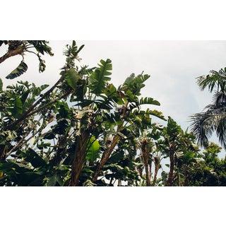 """""""Palms Horizontal"""" Original Framed Photograph"""
