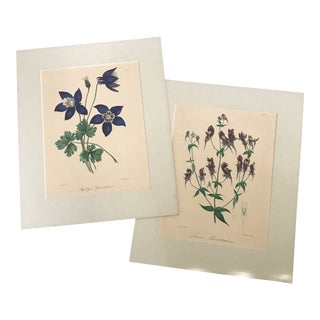 1836 English Engraved Floral Prints - a Pair For Sale