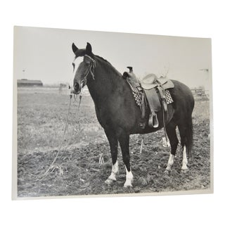 Vintage Black & White Horse Photograph C.1950 For Sale