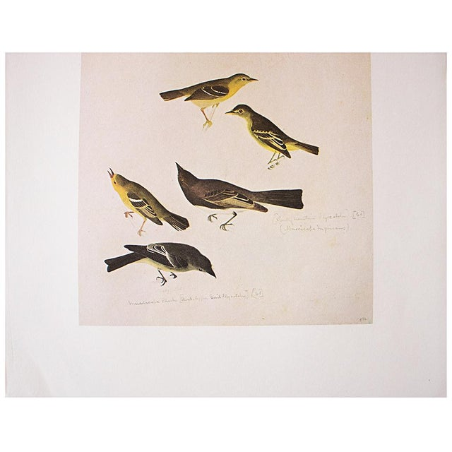 1960s Birds of America by John James Audubon, 1966 Vintage Print For Sale - Image 5 of 8