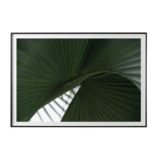 """Fibonacci Palm"" Unframed Photographic Print For Sale"