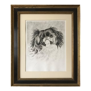 Antique Etching of a Pekingese Dog C. 1910 For Sale