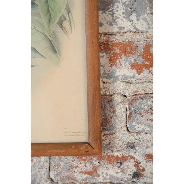 "John Gould ""Ramphatos Cuvieri-Toucan"" Bird Litho. - Image 6 of 8"