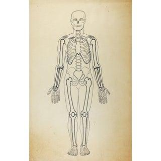 Vintage Skeleton Drawing For Sale