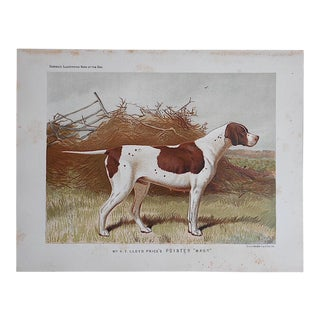 Antique Dog Lithograph-Pointer For Sale