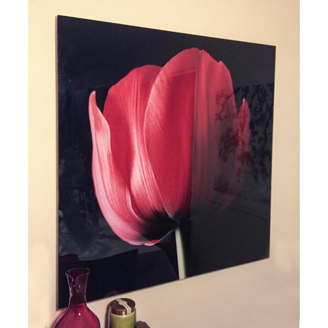 """Red Tulip on Black"" Photograph - Image 3 of 6"