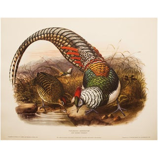 XL Original Magnificent Lady Amherst Pheasant by Daniel G. Elliot, Vintage Lithogravure For Sale