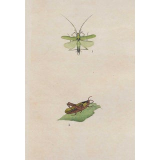 Antique English Insect Handcolored Engraving For Sale