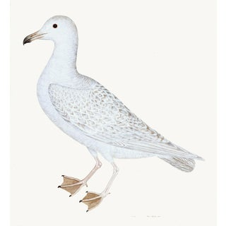 Larus (White Gull) Plate 25 by Olof Rudbeck For Sale