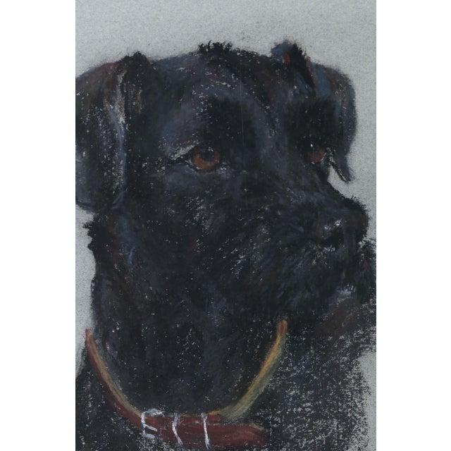 Labrador Retriever Original Pastel Drawing - Image 3 of 6