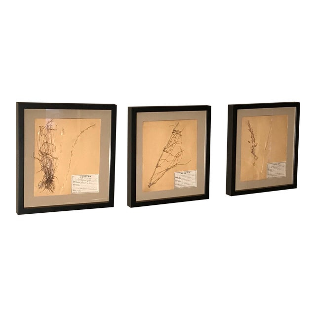 20th Century French Framed Herbier/Botanical Floral Art- 3 Pieces For Sale