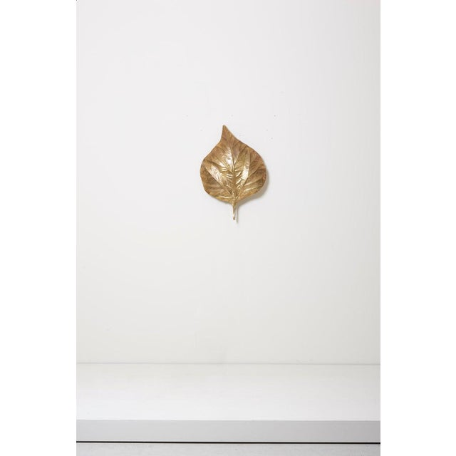 1970s 1 of 4 Huge Rhaburb Leaf Brass Wall Lights or Sconces by Tommaso Barbi For Sale - Image 5 of 13