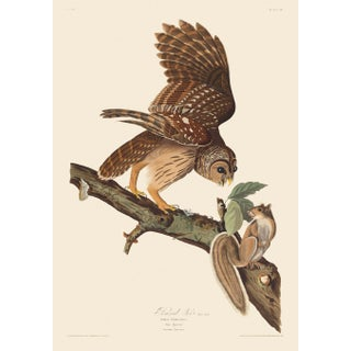 John James Audubon Print, Barred Owl For Sale