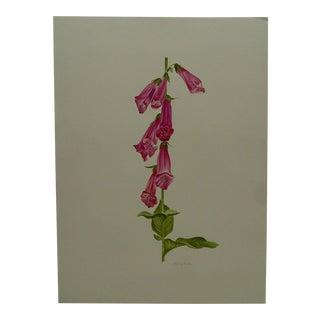 """Foxglove: Digitalis"" Original Painting on Paper"