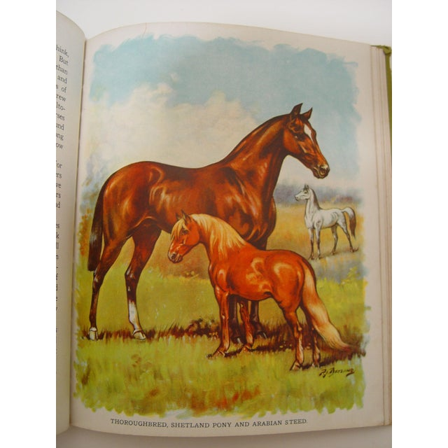 1928 Animal Friends Story Book For Sale - Image 10 of 10