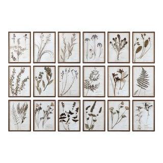 Contemporary Botanical Prints, Framed - Set of 18 For Sale